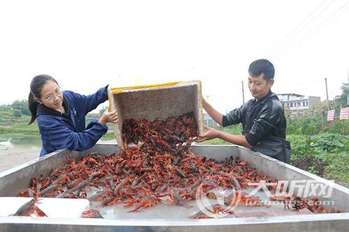 小小龙虾红透泸州返乡青年的创业梦想